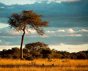 Safari i Hwange, Zimbabwe