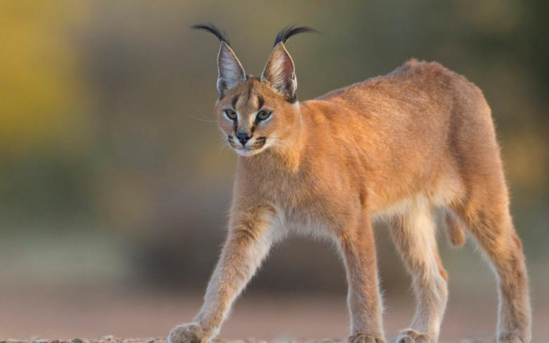Dyrelivet i Hwange nationalpark