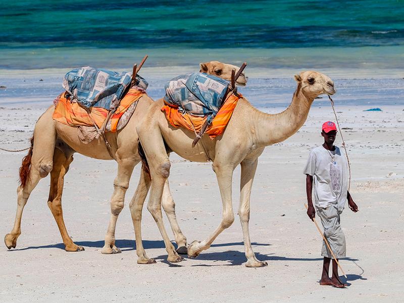 Ved Kenyas kyst