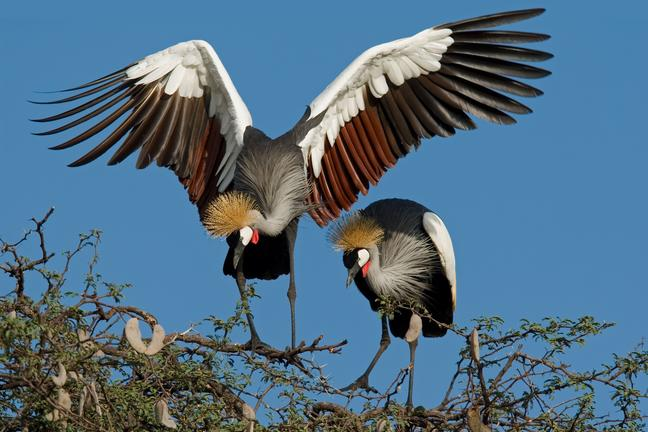 Hwange nationalpark