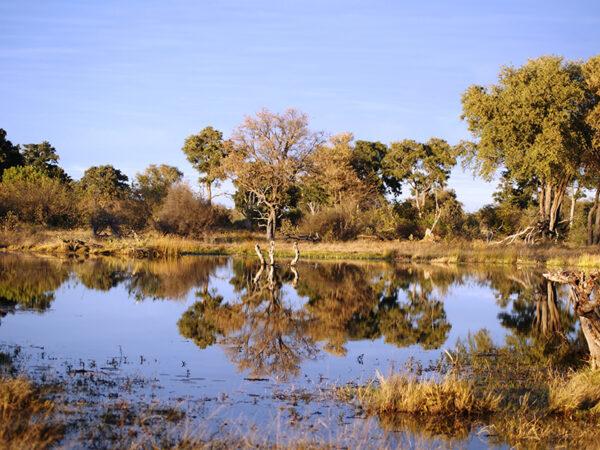Khwai-floden