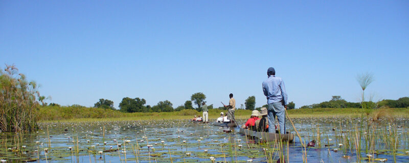 Mokoro - Botswanas højdepunkter