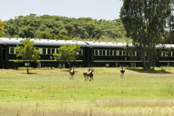 Togrejse fra Pretoria til Durban