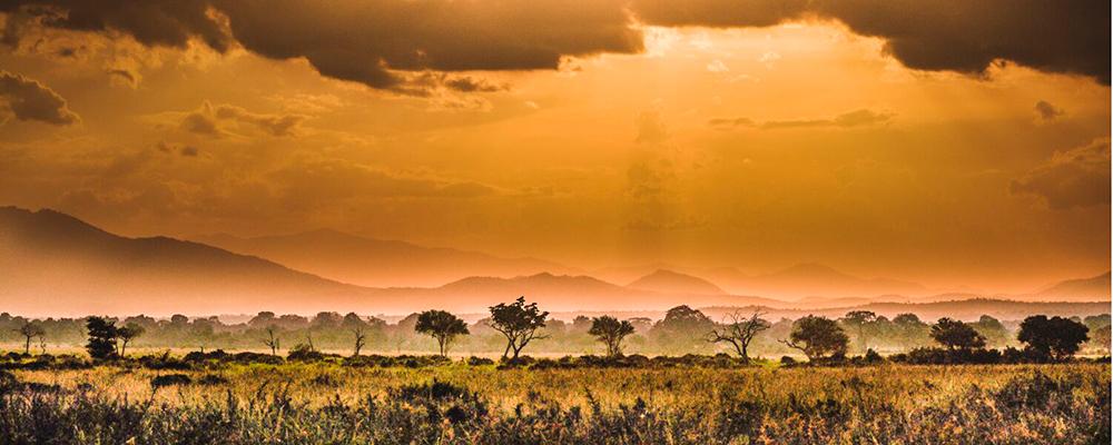 safari i mikumi
