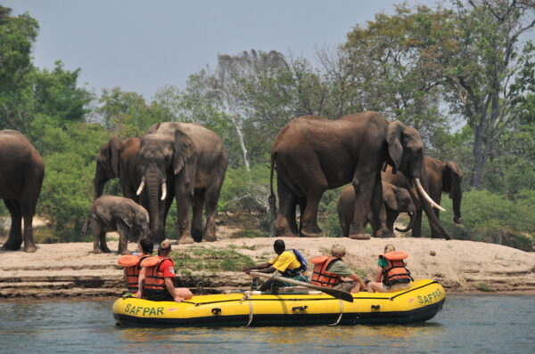 Safari Zambezi-floden