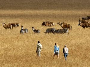 Bushvandring i nyika nationalpark