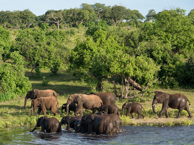 Elefanter v chobe-floden - Safari i Botswana og Zimbabwe
