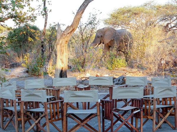 Elefantbesøg i camp - Safari i Botswana og Zimbabwe