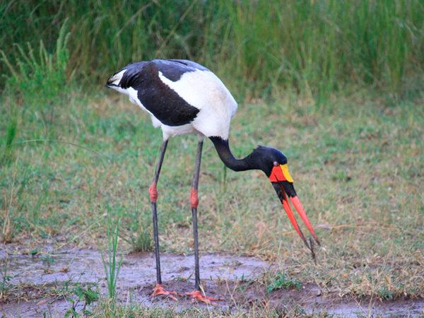 south luangwa nationalpark