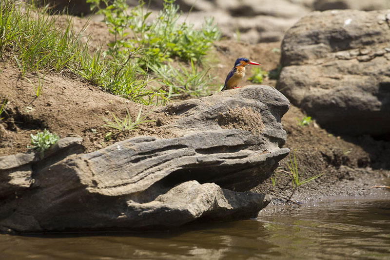 Fugleliv i Nkhoakota reservatet