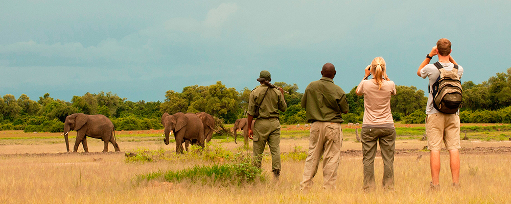 Bushvandring i south luangwa np
