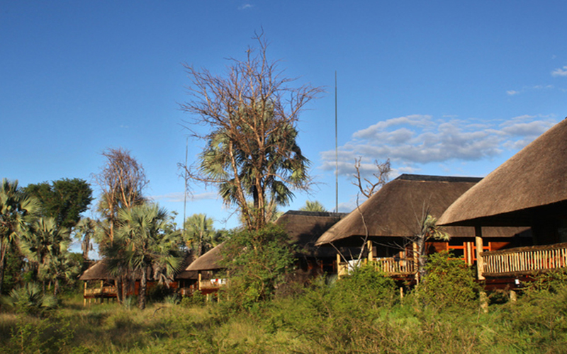 Safari i Botswana og Zimbabwe