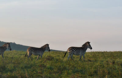 Nyika nationalpark, Malawi