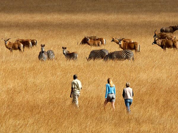 Safari til fods i Malawi