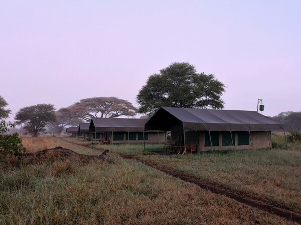Safari og badeferie - Serengeti lodge