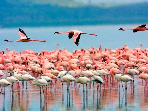 Lake Naivasa nationalpark