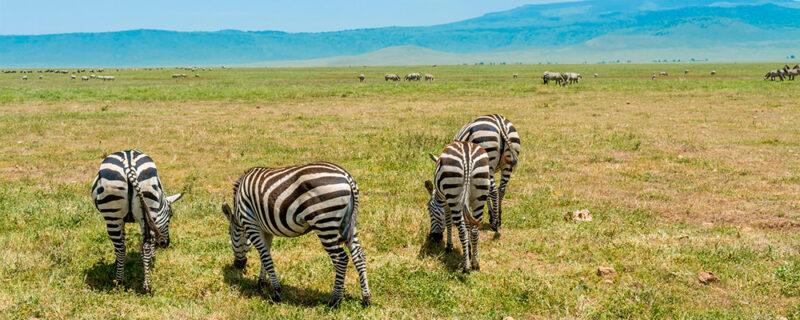 Safari og badeferie i Tanzania