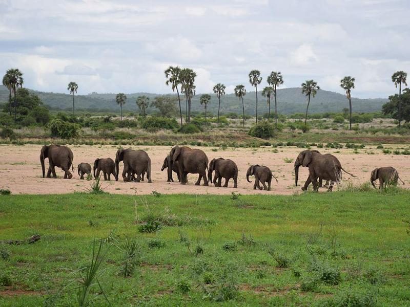Kombiferie safari og strand