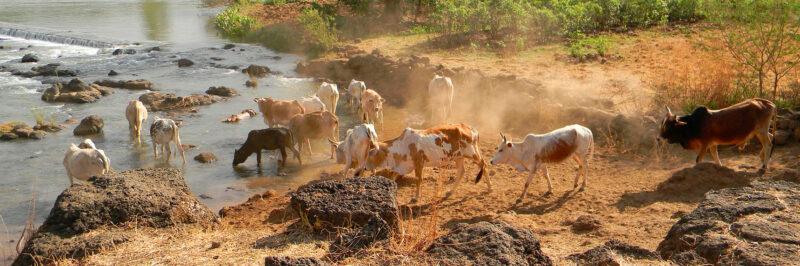 Etiopien Det bedste af Etiopien