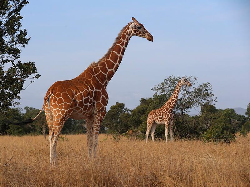 Samburu vildtreservat