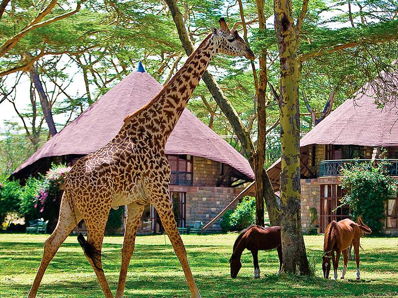 Lake Naivasha Sopa Lodge - Kenya-safari