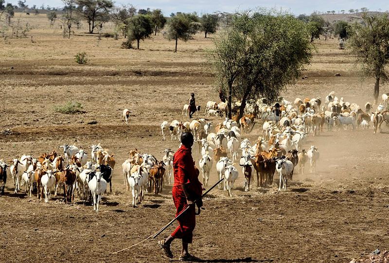 safari og badeferie i Tanzania - masaiier i serengeti