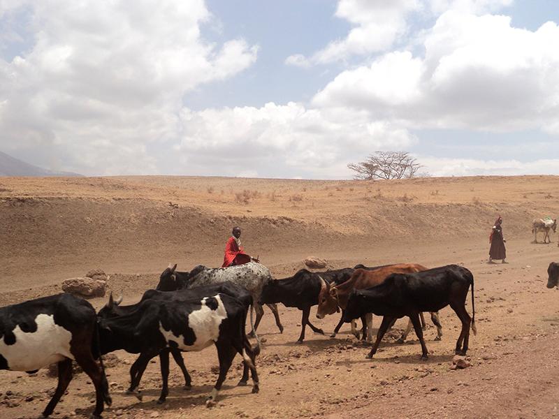 safari og badeferie i Tanzania - masaii