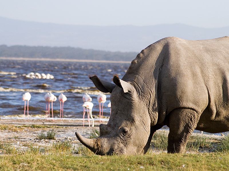 Lake Nakuru nationalpark