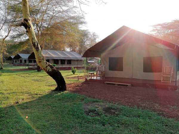 Safari-rundtur i Tanzania Lake manyara lodge