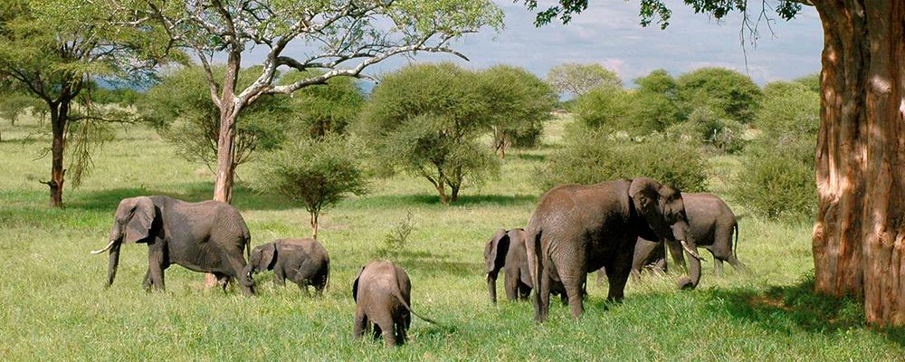 Safari-rundtur i Tanzania