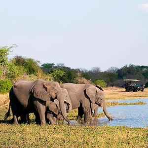 Liwonde nationalpark - MALAWI