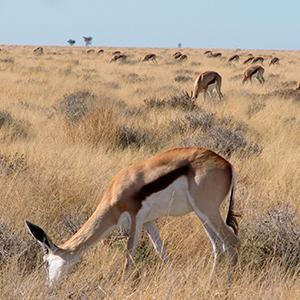 Central Kalahari - BOTSWANA