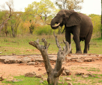 5 dage i Kruger nationalpark