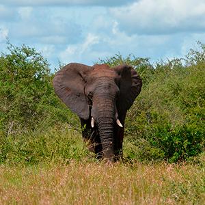 Kruger nationalpark - SYDAFRIKA