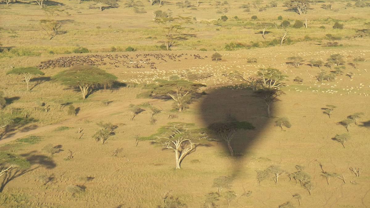 Serengeti i luftballon