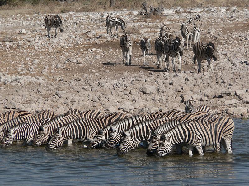 Luksus Kør selv-rejse i Namibia