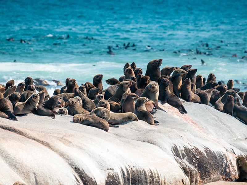 skeletkysten namibia - Luksus Kør Selv-rejse