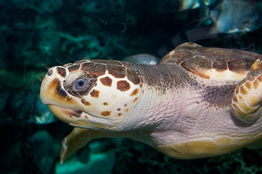 Skildpadder i iSimangaliso Wetland Park